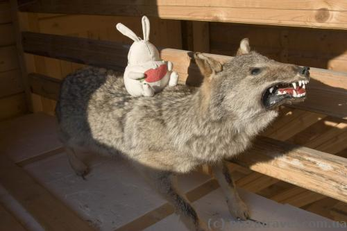 Our traveling toy saddled the local wolf :)