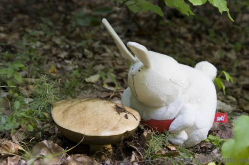 Our traveling toy helps us look for mushrooms.