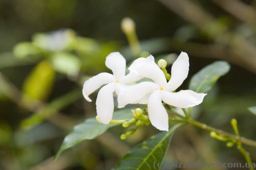 Цветы возле храма Будурувагала