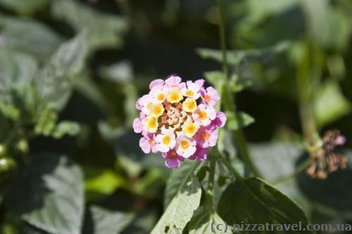Цветок около водопада Бамбараканда