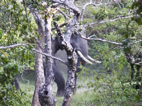 Очень большой слон