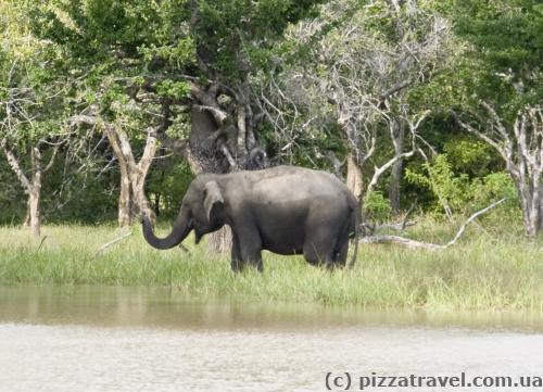 Слоник купается.