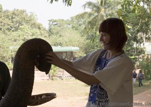 Кормим слоника