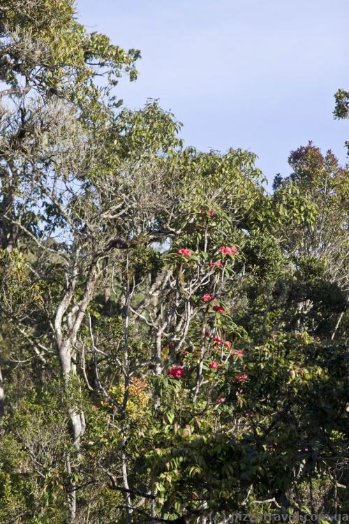 Растения на плато Хортон