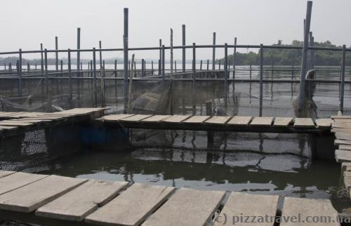 Place for cultivation of fish