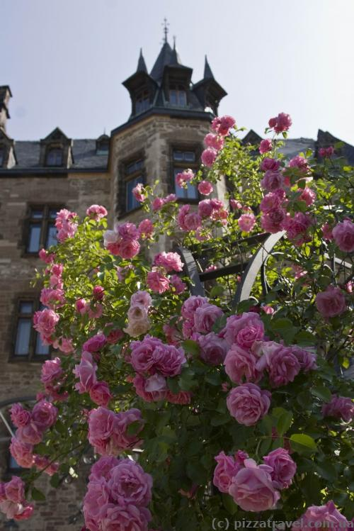 Flowers near the castle