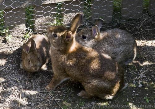 Rabbits live in one of the courtyards.