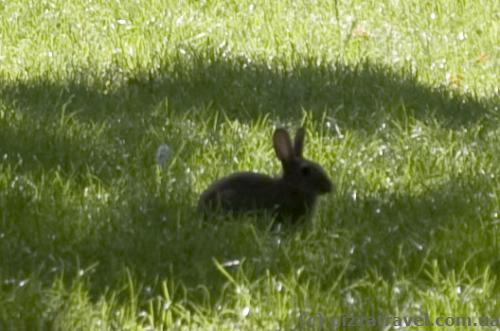 There are rabbits in the park.