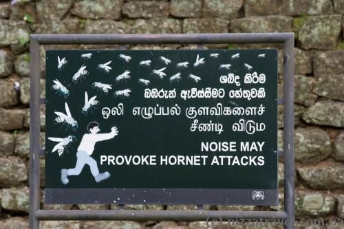 Don't make noise and don't touch the bees, and you'll be ok :)