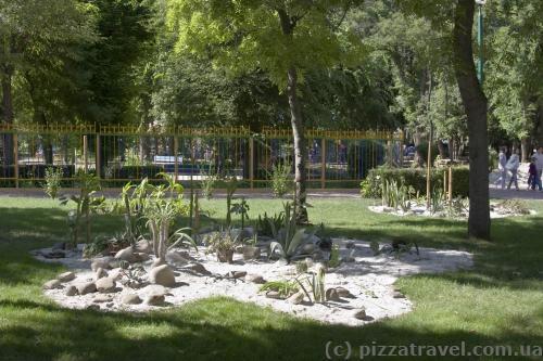 Arboretum in Kirovohrad