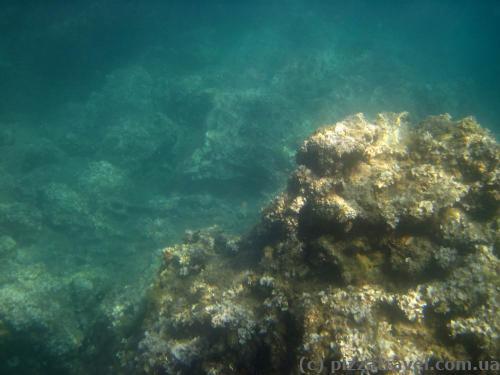 Подводный мир около Херцег-Нови