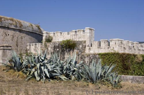 Агавы в форте Мамула