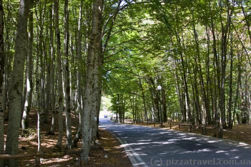 Дорога в национальном парке Ловчен