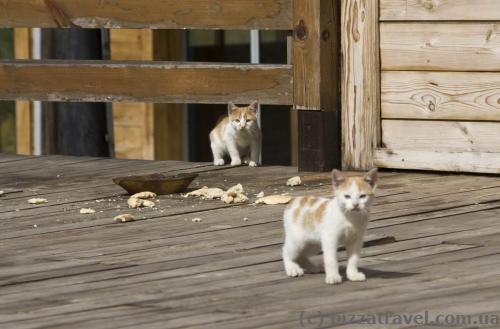 Влітку в Колашині тільки коти