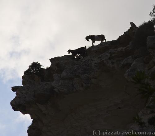 Будьте осторожны, козлы бросаются камнями сверху
