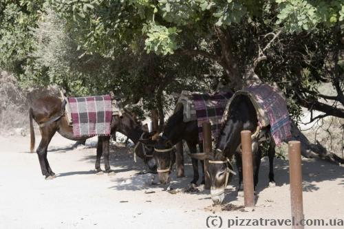 You can ride a donkey in Akamas.