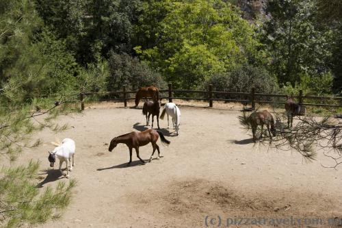 Лошади в Пано Платрес