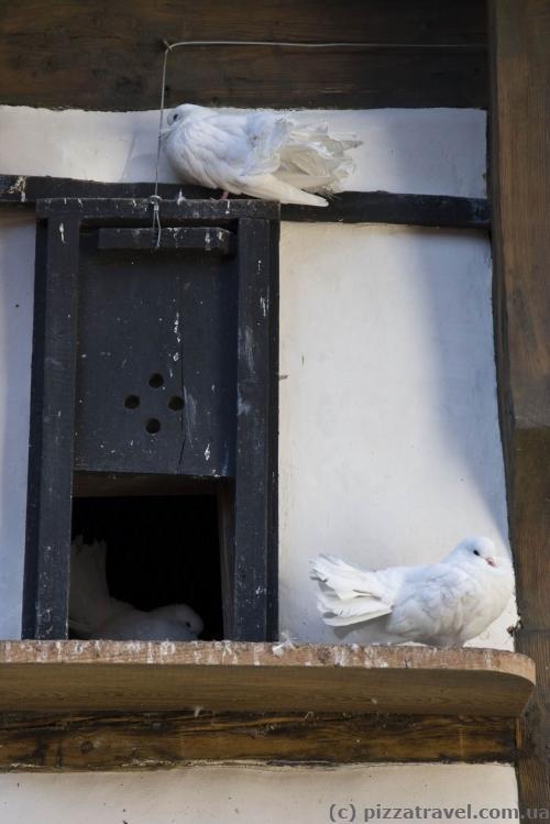 В замке живут голуби.