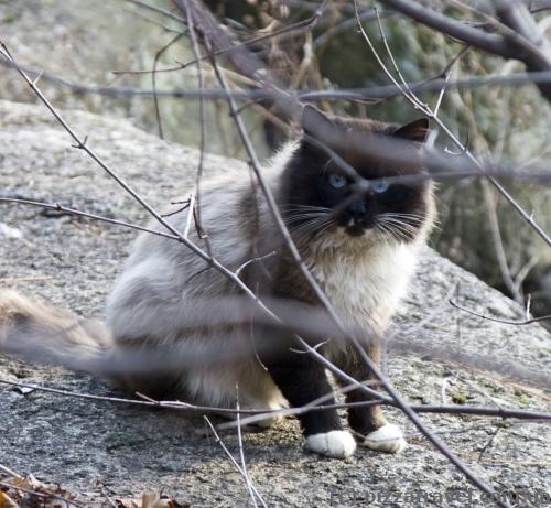 Кіт у парку Островського в Коростені