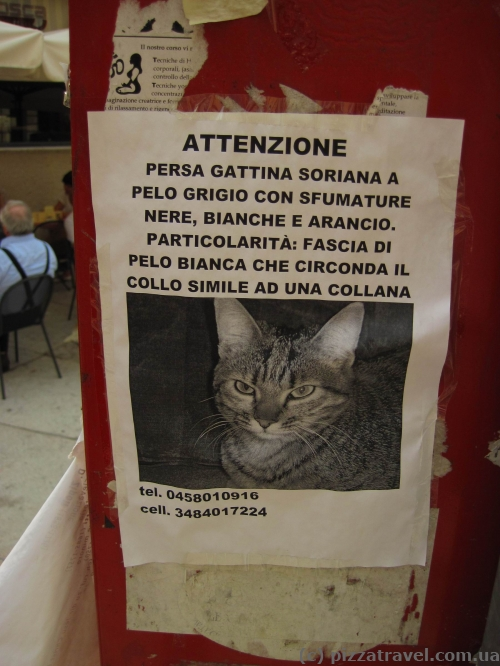 Lost cat in Verona