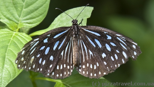 Butterfly Park in Kuala Lumpur