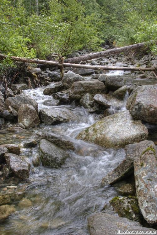 Небольшой водный поток в лесу