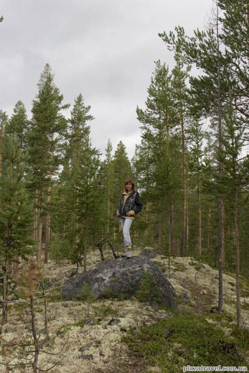 Forest near the Polfossen Waterfall
