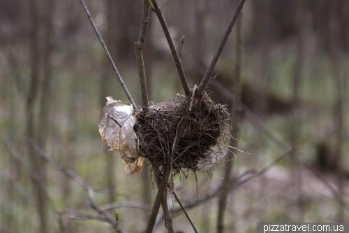 Гнездо на тонких ветках