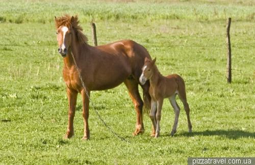 Вокруг Шацких озер много красивых лошадей