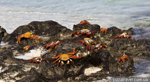 Sally Lightfoot crabs on the Chinese Hat Island