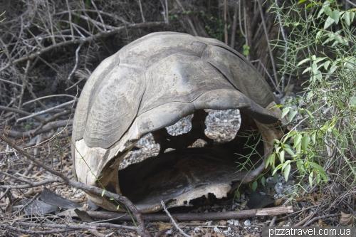 Пустой панцирь черепахи