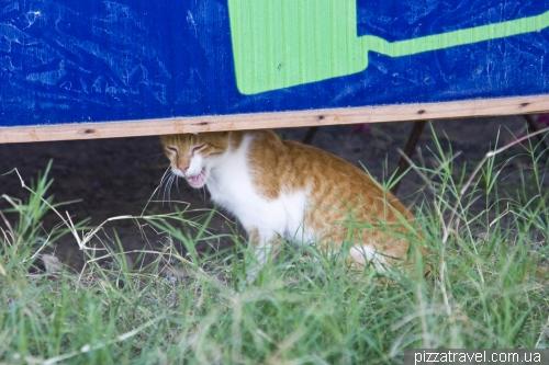 Кот в Пуэрто Вильямиль