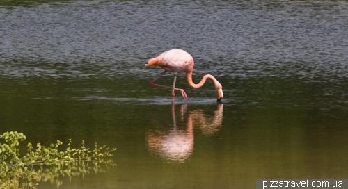 Flamingo on the Garrapatero Beach