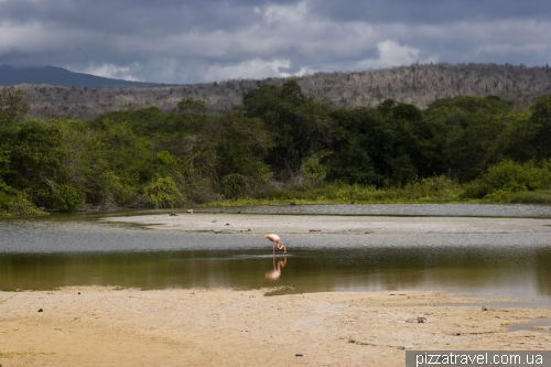 Фламинго на пляже Гаррапатеро