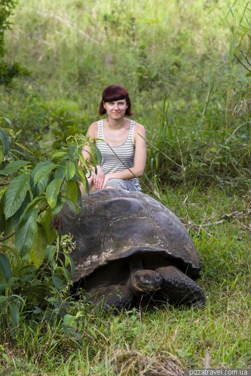 El Chato tortoise reserve (Santa Cruz)