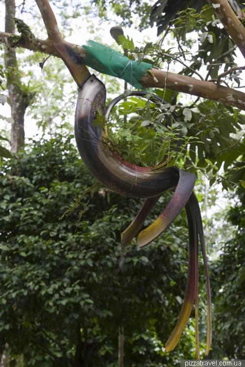 Park Amazonico in Tena