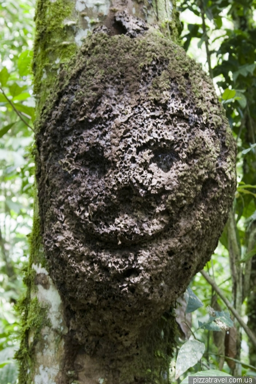 Парк Амазонико в Тене