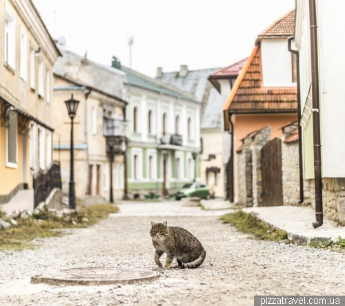 Cat in the old town of Kamianets-Podilskyi