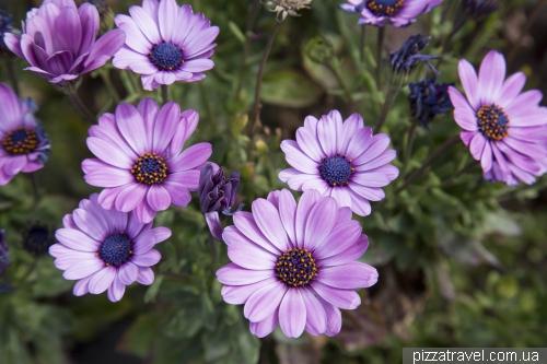 Мальтийские цветы