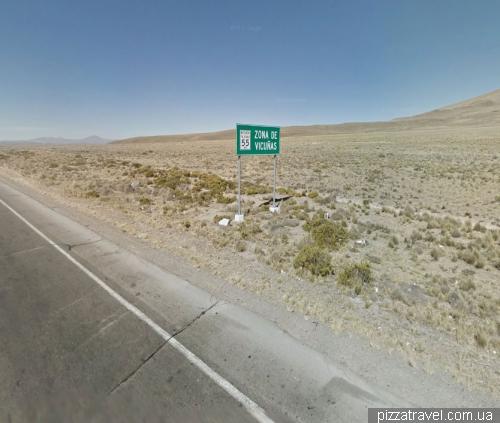 Место, где живут викуньи