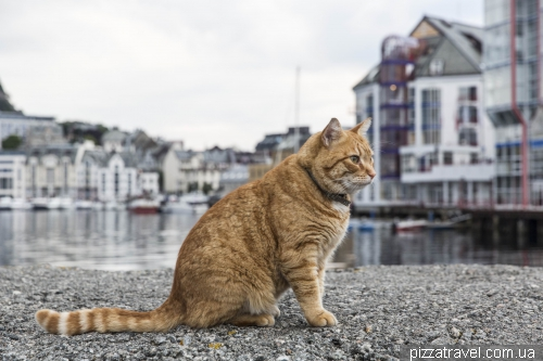 Кот в Олесунне