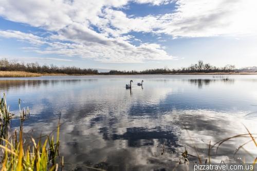 Swan Lake, Chortoriya