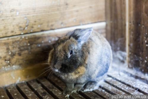 Домик кроликов