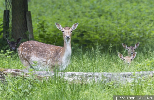 The Zoological Garden in Hannover (Tiergarten)
