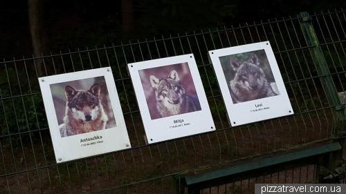 Волчий питомник в Дорвердене