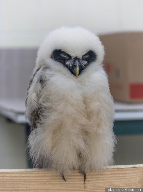 Крупнейший парк птиц в мире в Вальсроде