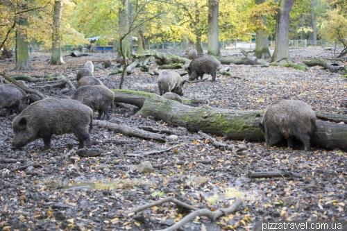 Зоопарк в Шпринге