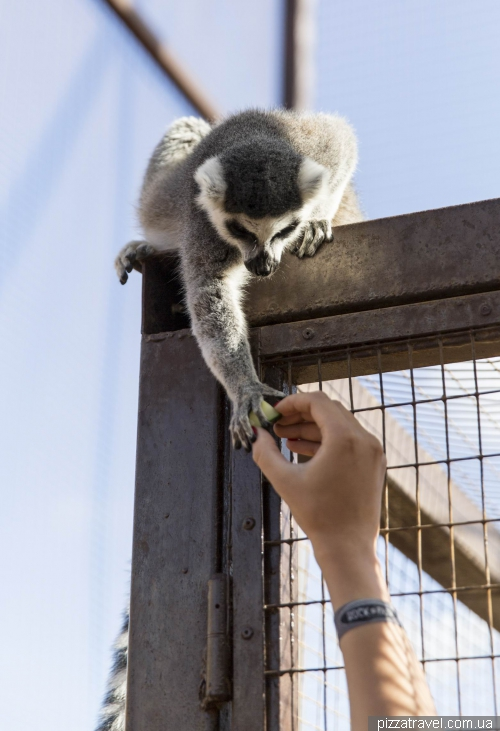 Парк Мавп (Monkey Park), Тенеріфе