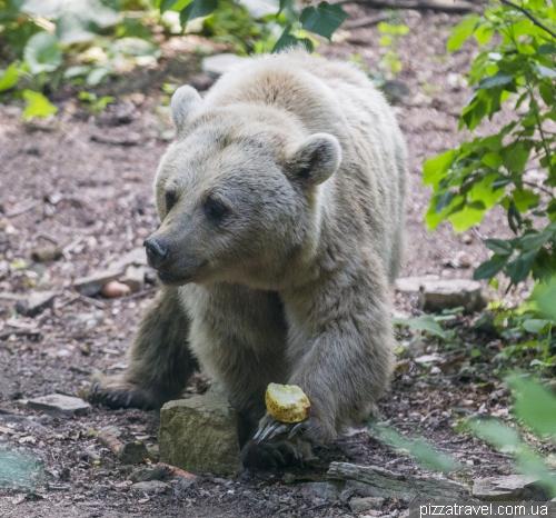 Парк ведмедів Ворбіс