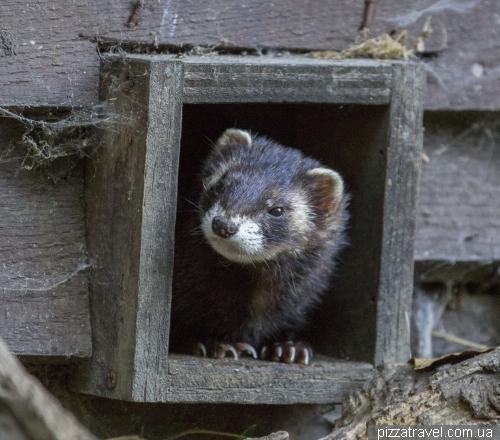 Otter center (Otter-Zentrum)